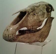 Carving Horse Skull,Belu_Atoni people      from East_Timor…