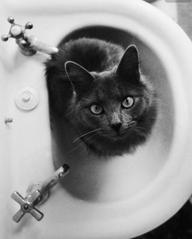 20 best Winter Photography images on Pinterest | Kitty cats, Cute ...