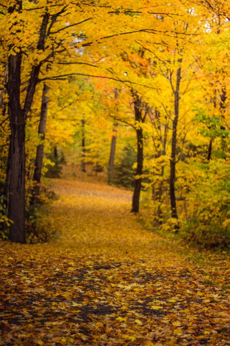 Photograph Yellow Blast by Lee Bodson on 500px
