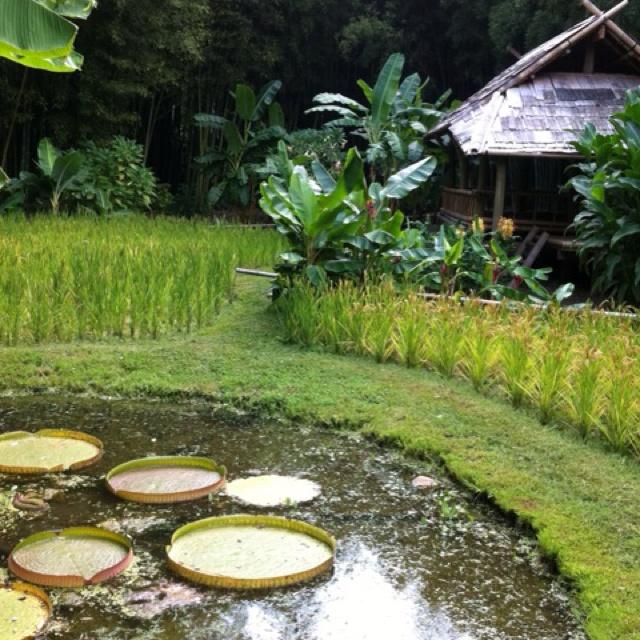Les 93 meilleures images du tableau anduze sur pinterest - La bambouseraie a anduze ...