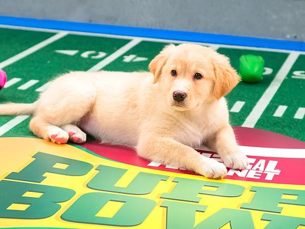 5 Most Paw-Dorable Moments from the Puppy Bowl  Animals & Pets, Cute Pets, Dogs