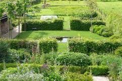 Afbeeldingsresultaat voor haagbeuk in tuin