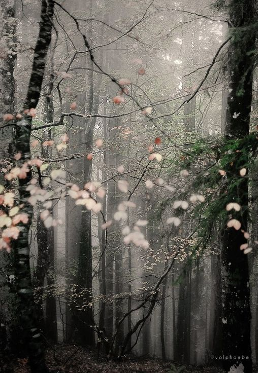 Trees in the mist by Roberta Fuganti. Beautiful, BEAUTIFUL picture. Very ethereal