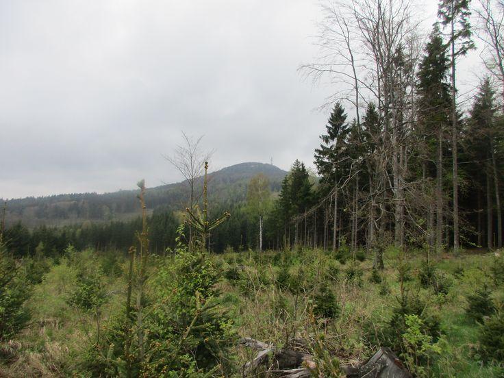 Les a Jedlová - Lužické hory - severní Čechy