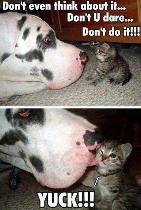 doggie kisses
