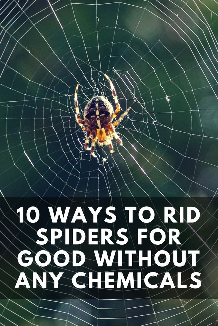 Best 25 spider repellant ideas on pinterest spider for Home remedies to get rid of spiders