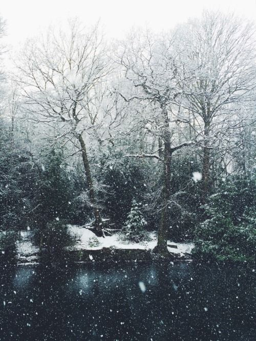 Pin by Ash Huang on Dreamworld   Pinterest   Lakes ... Pictures Trees In Winter Pinterest