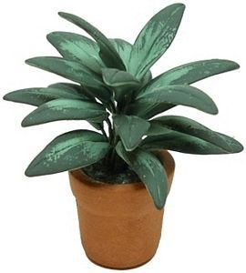 Tropical Plant in Clay Pot - Tropical Plant in Clay Pot - A beatiful accent for