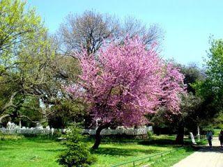solo dibujos y fotos: paisajes color rosado ♥