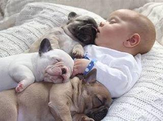Night loves Se não for o Senhor o construtor da casa,será inútil trabalhar na construção.Se não é o Senhor que vigia a cidade,será inútil a sentinela montar guarda. Será inútil levantar cedo e dormir tarde,trabalhando arduamente por alimento.O Senhor concede o sonoàqueles a quem ele ama.Salmos 127:1-2#itgirlsbrazil #ownt #cute #love #baby #dog #puppy #fofuradanoite #sleep #sono #night #blogueirascristãs #fé #boanoite