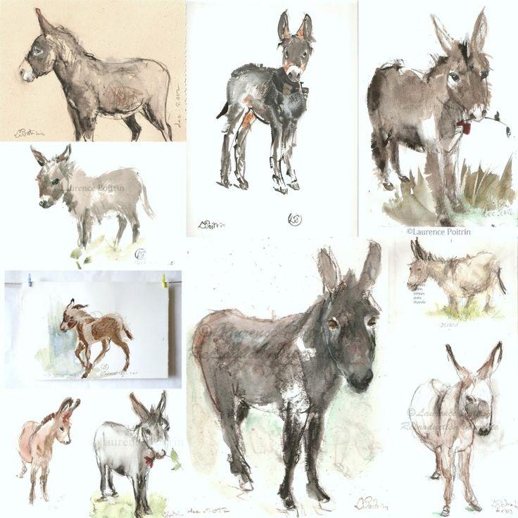 1000 id es sur le th me miniature donkey sur pinterest for Portent sur les anes