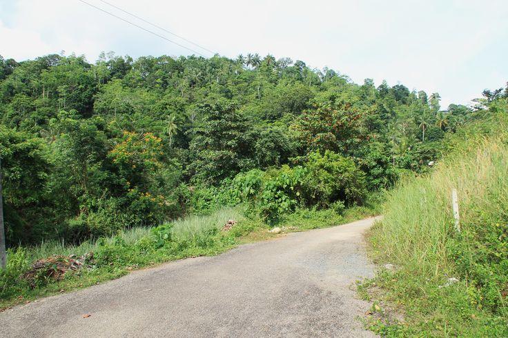 het straatje naar HomeStay Srilanka, Poddala