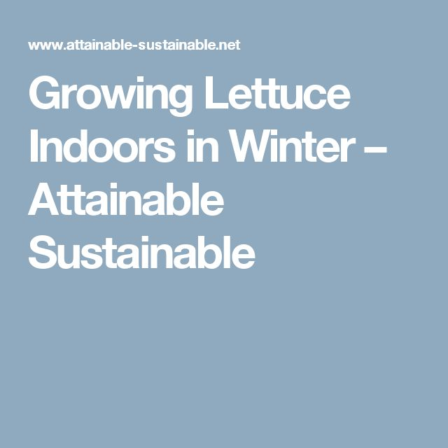 Growing Lettuce Indoors in Winter – Attainable Sustainable