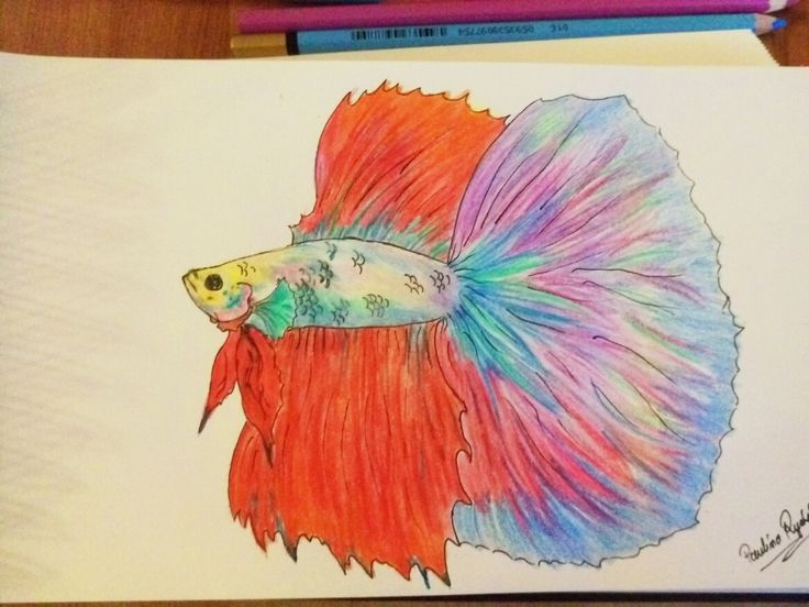 #bettafish #bettafishart