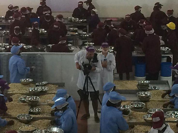 IAT crew filming at Macadamia factory Ten Senses, an SME client of Umati Capital