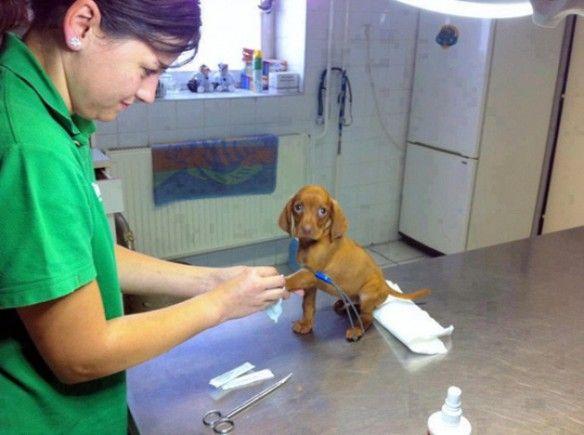 Csodálatos állatorvosok - fotók - Képek / Videók - Állatportál