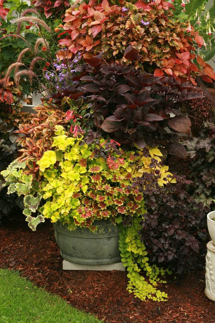 934 best Garden images on Pinterest | Gardening, Landscape design ...