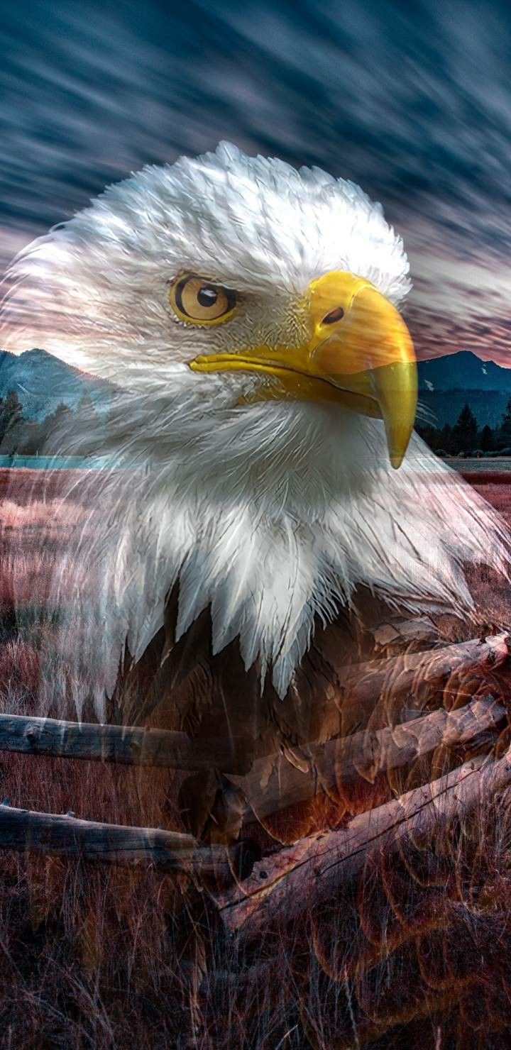 4k Ultra Hd Eagle Wallpapers For Android And Iphone Eagle Wallpaper Beautiful Wallpaper For Phone Eagle Images