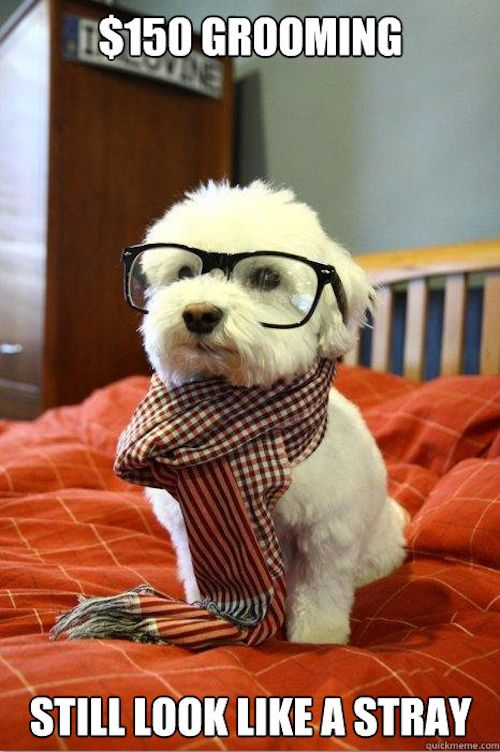 AKA Charlie: Cutest Dogs, Dogs Memes, So Cute, Hipster Dogs, Hipster Puppies, Mean Girls, Socute, Animal, Hipsterdog