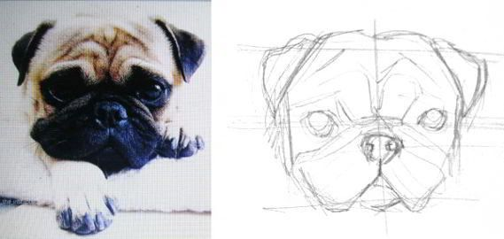 How To Draw Pug Head And Face Drawings Pugs