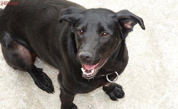 AMPARA Animal organiza campanhas de adoção no Rio