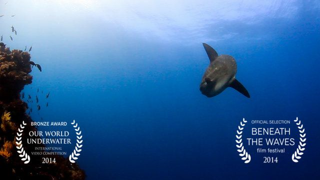 OceanShutter.com presents an underwater short film - Darwin's Dream - Bronze Award in the 2014 Our World Underwater Film Competition.  Please Like, Share and Comment!  Darwin's Dream was created to display the underwater spectacle of the Galapagos Islands. Filmed in 5 short days of diving, the amount of animals seen was unreal. Having seen hundreds of sharks, mola mola's, turtle, iguanas, penguins and even orcas. It truly was an experience of a lifetime. I hope you enjoy ...