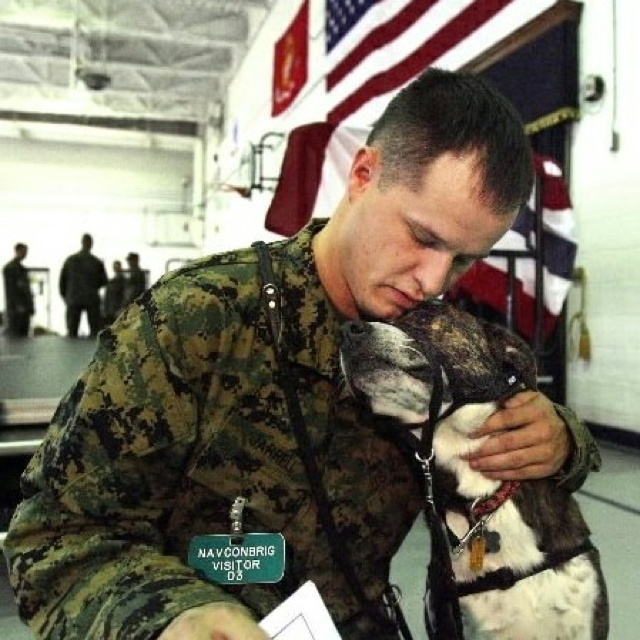 Service men and dogs