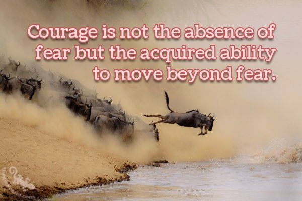 Courage is not the absence of fear but the acquired abilityto move beyond fear.  #courage #absence #fear #ability #beyond #quotes  ©The Gecko Said - Beautiful Quotes