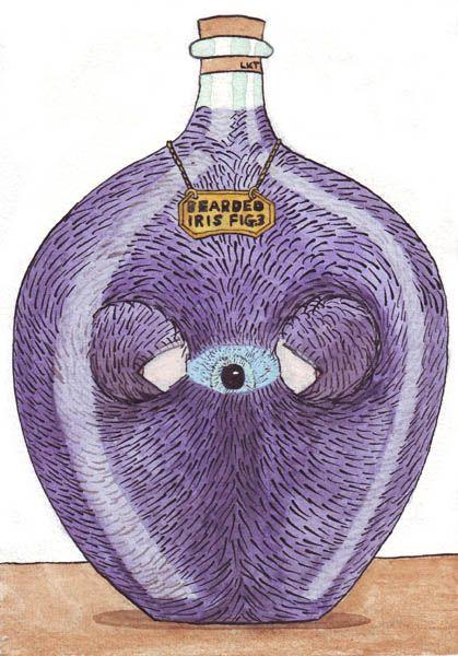 #Picaweek15 Bearded Iris