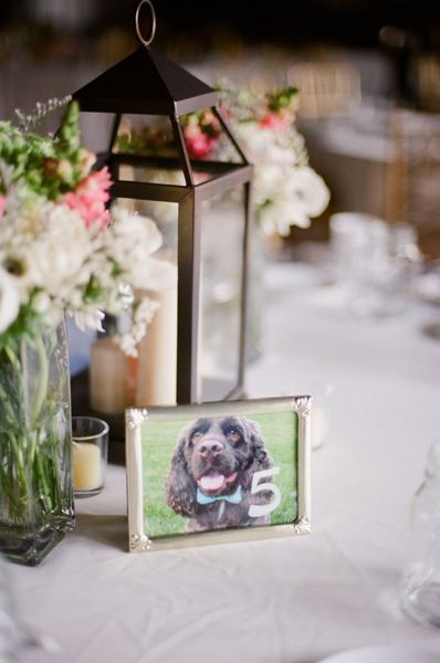 Dog Pic Table Number