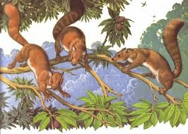 (18) 70 millones de años (aC) - Pequeños mamíferos se adaptan mejor que nadie a las nuevas condiciones de la tierra. Clima riguroso y cambiante; sobre todo, los cataclismos son mejor soportados por estos pequeños insectívoros, que serán el tronco de desarrollo de los futuros primates.