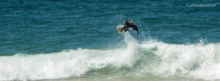 Wildweb nas praias de #SalvadorDeBahia #Brasil #surf #fotografia #beach