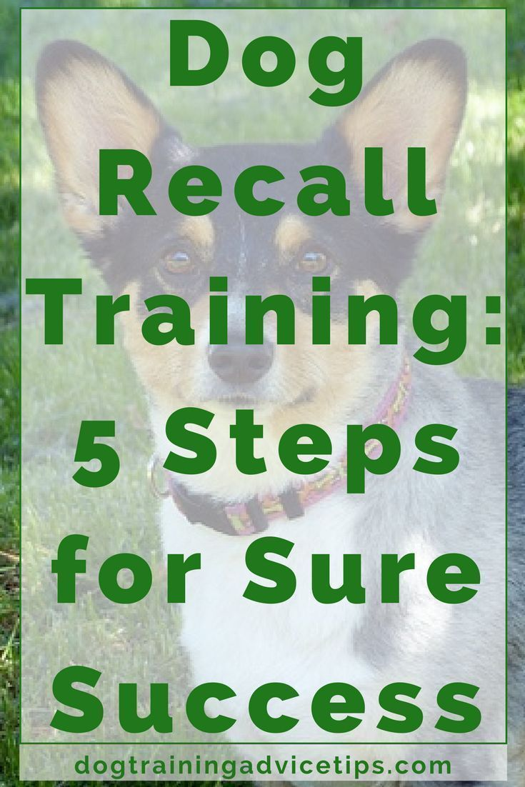 Dog Recall Training 5 Steps For Sure Success Training Your Dog