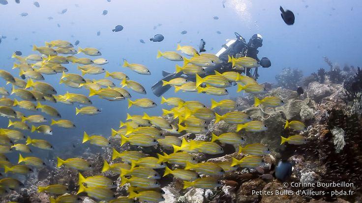Bangka, le bonheur sous l'eau