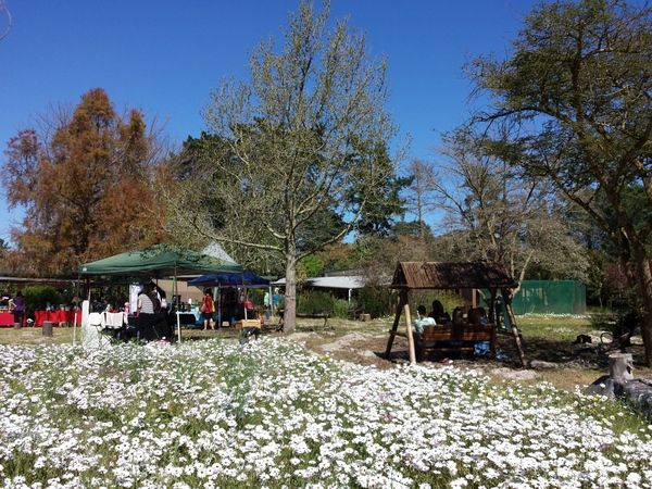 Camphill market surrounded by spring daisies and children enjoying the swing bench and the jungle gym.