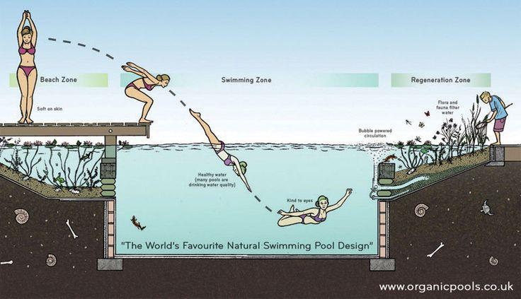 David Pagan es un experto en estanques que ha desarrollado una forma de crear piscinas naturales que no tienen bomba ni filtros. Crea corrientes de agua con oxigenadores (aireadores) y usa plantas para limpiar el agua.