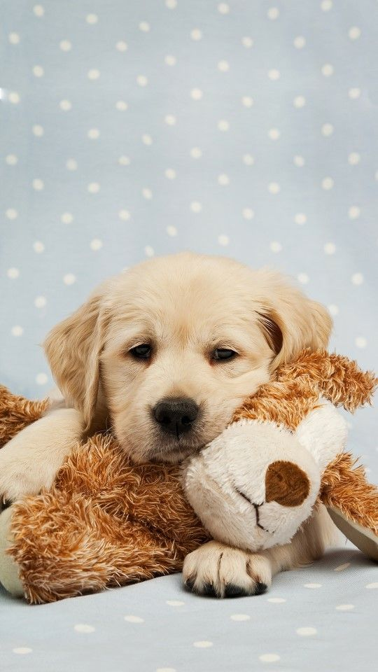 my teddy bear is my pet ... but i am a really pet...