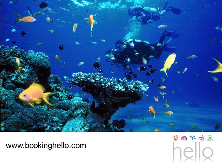 LGBT ALL INCLUSIVE AL CARIBE. Si estás en busca de experimentar nuevas aventuras con tu pareja durante las vacaciones, en Booking Hello les recomendamos bucear en la zona de Bayahíbe y La Romana en el Caribe dominicano. Este es uno de los mejores lugares para la práctica de esta actividad y contemplar la belleza de sus arrecifes de coral, restos de naufragios y peces multicolores. Visita www.bookinghello.com, para más información. #BeHello