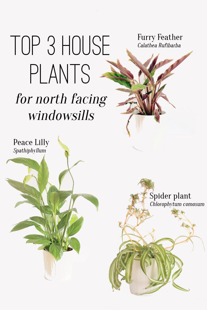 Plants for a north facing garden - Top Three House Plants For The North Facing Window It S A Kingdom