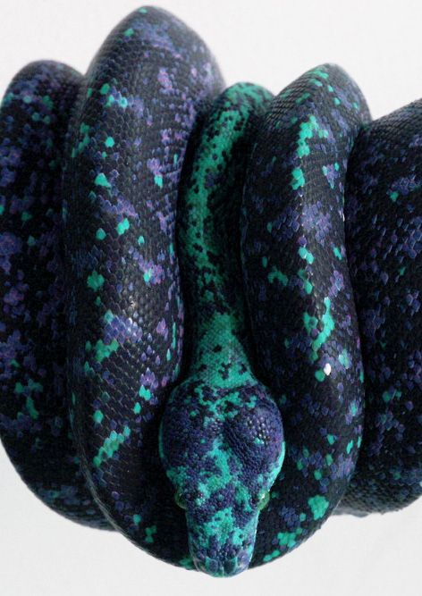 green purple & black snake   I don't like snakes but I do have a respect for them and an awe of their colors and patterns. This is crazy!!