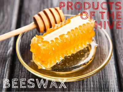 Beeswax is a remarkable by product of honey.  Beeswax is made by the youngest honey bees in a colony, they are too young to forage for nectar.  Beeswax is a very versatile product and is used to make candles, furniture polish, skin care, balms, soaps, earplugs, ear candles, crayons, food wraps, as an ingredient in sweets, a cover for cheeses and more.