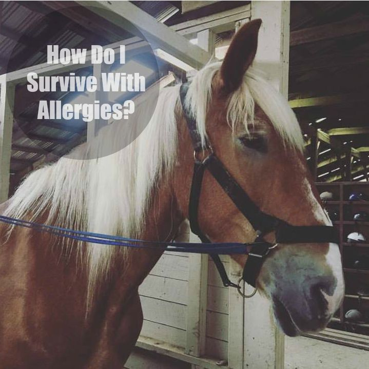 How Do I Survive With Allergies? ⋆ The Stuff of Success