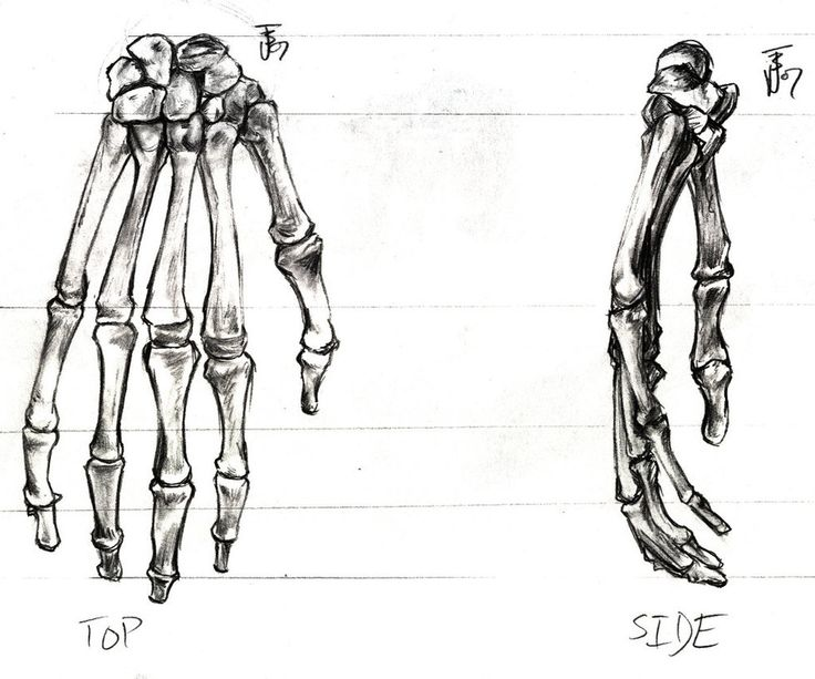 Anatomy Of Human Hand Bones Images - human body anatomy