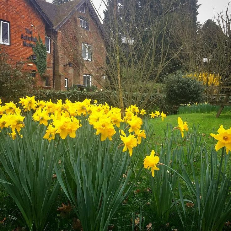 Dusting off the wedding camera bag for the first of the season at #gatwickmanor The daffs are out and love is in the air! #photography #wedding #sussex #crawley #gatwick #weddingphotographer