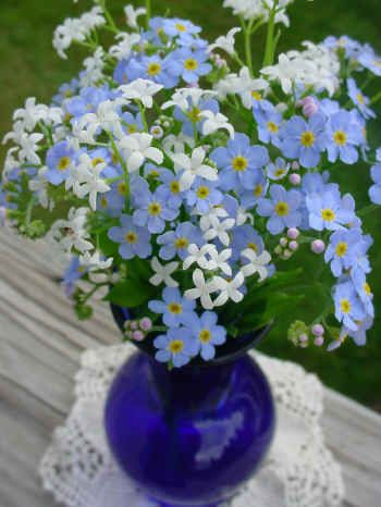 Forget-me-nots and sweet woodruff