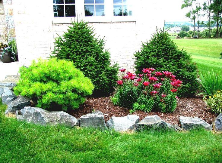 Oltre 25 idee originali per giardino con alberi su pinterest coltivare alberi da frutto - Alberi giardino sempreverdi ...
