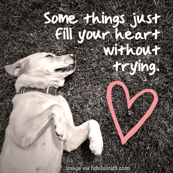 DOG....is really GOD giving us his love in another unconditional way!