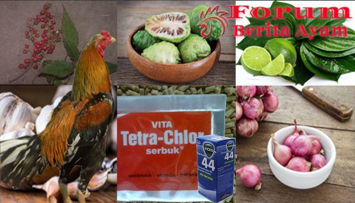 Mengatasi Penyakit Ngorok Ayam Dengan Resep Obat Tradisional Dan Apotik Sabung Ayam Online Ayam Penyakit