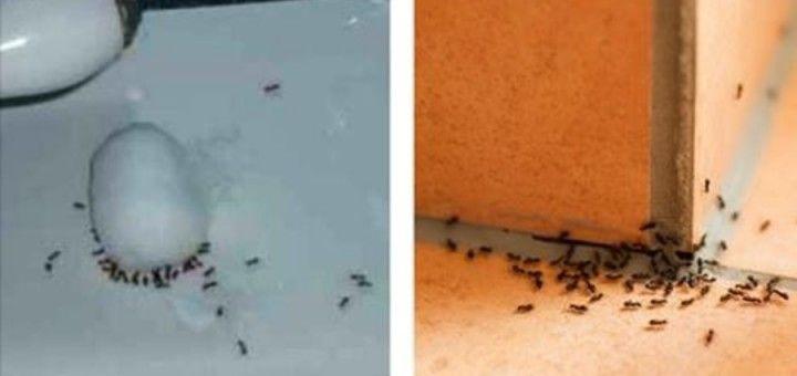 mieren-verdelgen