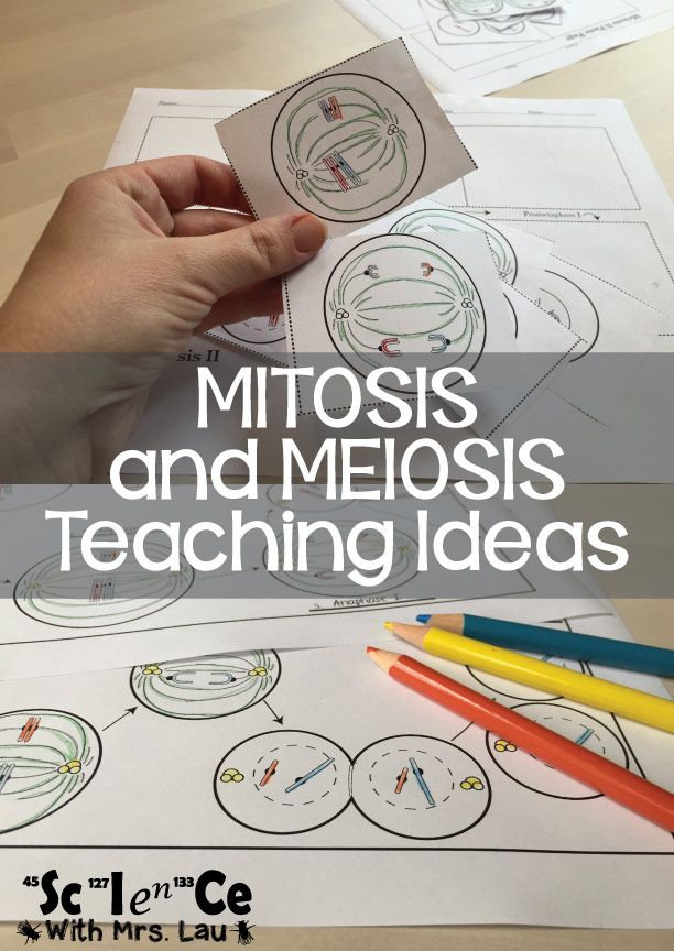 Mitosis and Meiosis Teaching Ideas: Coloring Activities, Video Project Ideas, and Animations for teaching cell division.  Blog Post by Science with Mrs. Lau